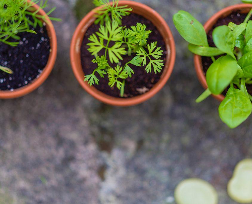 Hort i jardineria a l'Ateneu