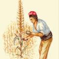 Josep Mestre Agricultura ecològica